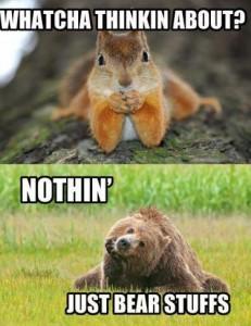 Bear-stuffs
